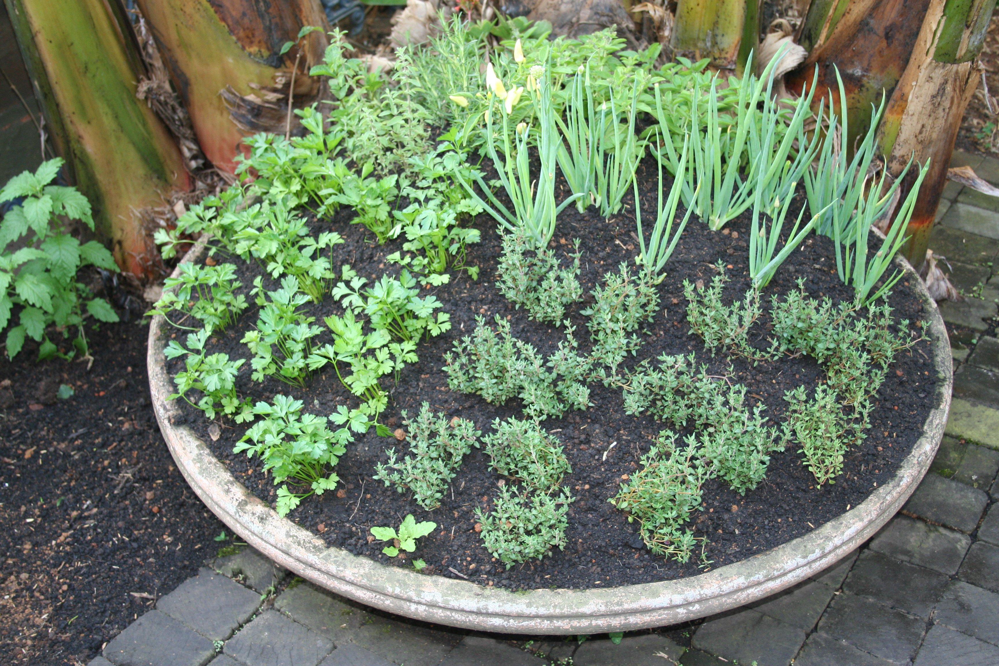 Como fazer uma horta dentro de casa? - Sa?de Melhor