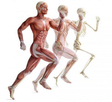 87fb356ad Atrofia muscular – Tratamento