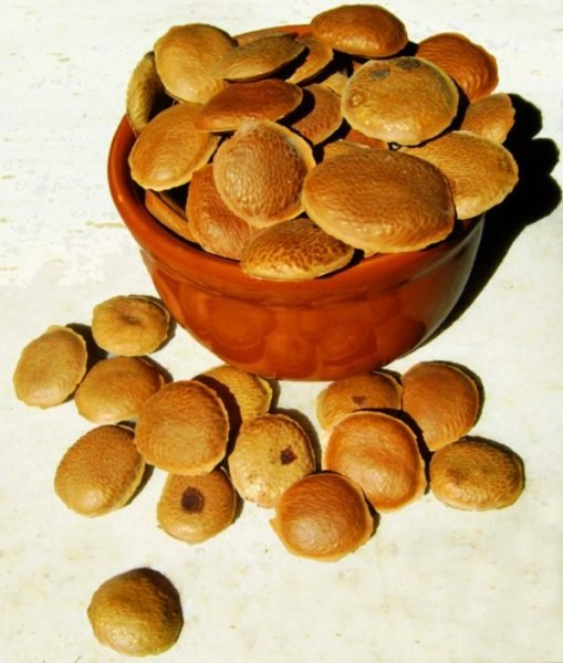 Efeitos da semente de Sucupira
